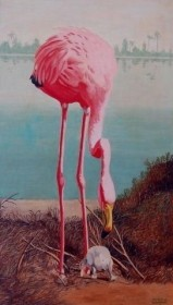 Bowman, Alfred. Tampa. Flamingo and Chick. OIl on board, 14 by 23 inches.