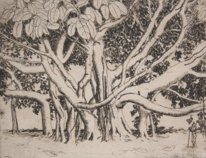 Hill, Polly Knipp. Giant Rubber Tree. Etching, 54 of 67, 7 by 9 inches.